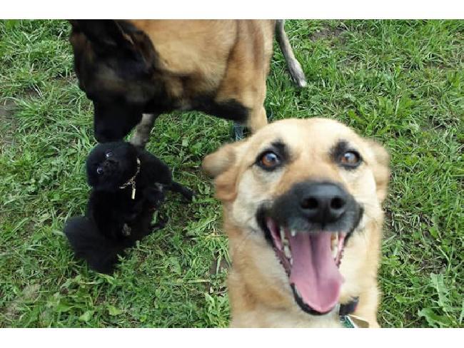12 เคล็ดลับการถ่ายภาพเซลฟี่ที่คนสามารถเรียนรู้จากสัตว์โลกผู้น่ารัก