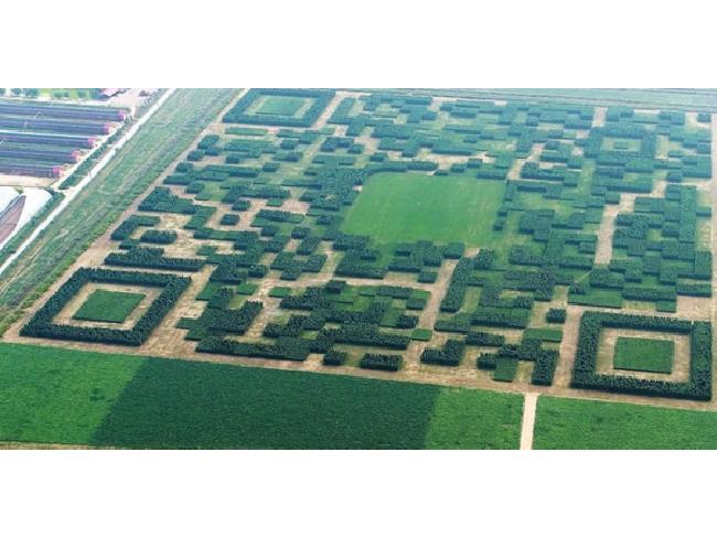 [ที่สุดในโลก] หมู่บ้านจีนปลูกต้นสน 130,000 ต้น ทำเป็นรูป QR Code สแกนเพื่อเข้าถึงข้อมูลท่องเที่ยวได้