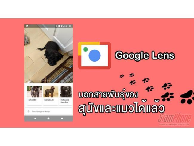ฉลาดไปอีกขั้น !! Google Lens สามารถแยกแยะสุนัขและแมวได้แล้ว ว่าเป็นสายพันธุ์อะไร
