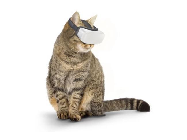 ไม่ใช่แค่มนุษย์! ทีมนักวิจัยคิดค้นแว่น VR สำหรับน้องแมว พร้อมคอนเทนต์สุดโดนใจ
