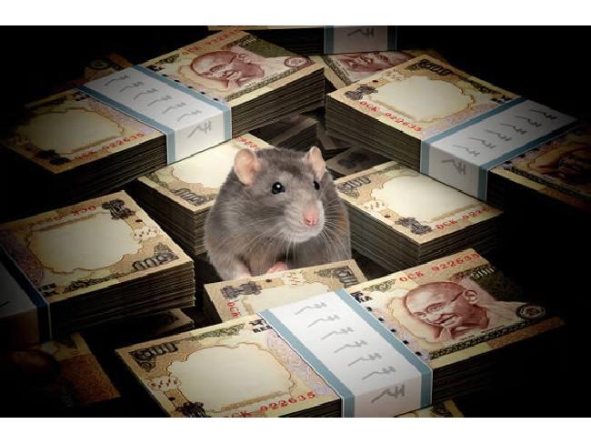 โจรรุ่นจิ๋ว! ที่อินเดียพบหนูแอบเข้าไปในตู้เอทีเอ็ม กัดทำลายธนบัตรมูลค่ากว่า 600,000 บาทก่อนตายคาตู้