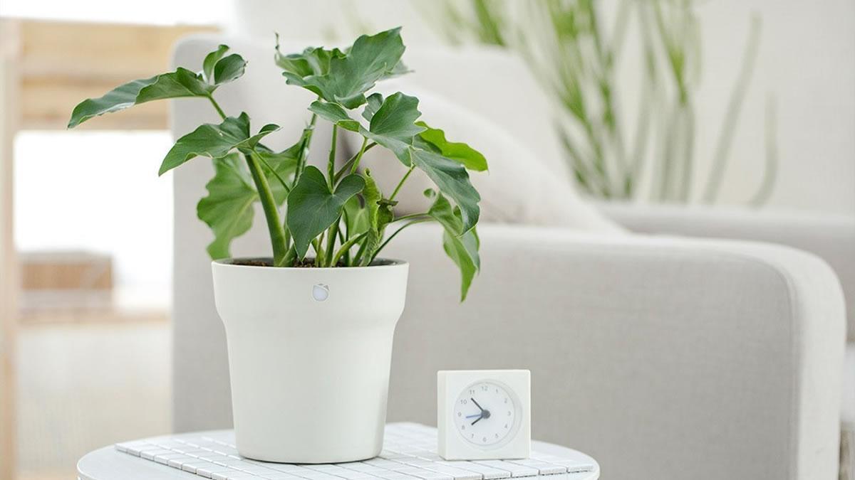 ปลูกต้นไม้! Xiaomi Mi Smart Flowerpot Plant กระถางอัจฉริยะ สำหรับไลฟ์สไตล์ยุคใหม่